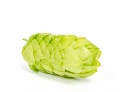 NZ hops can help during fasting
